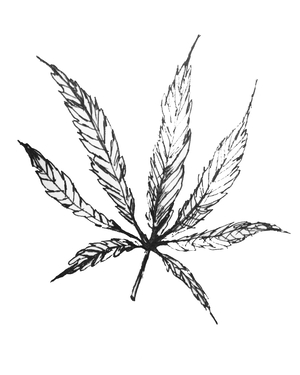 cannabisincolor Profile Image
